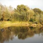 Zwemvijver en visvijver in de herfst