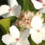 Bloemen in de grote tuin van de minicamping